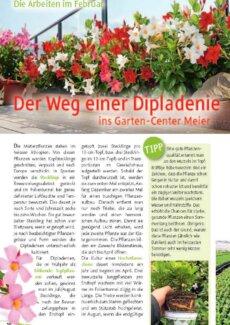 Presseartikel: Der Weg einer Dipladenie ins Garten-Center Meier (Pflanzenfreund (Fachmagazin Garten-Center Meier, Dürnten) | Februar 2017)