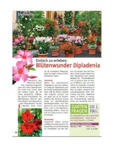Presseartikel: Einfach zu erleben: Blütenwunder Dipladenia (Pflanzenfreund (Fachmagazin Garten-Center Meier, Dürnten) | April 2017)