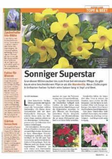 Presseartikel: Sonniger Superstar (Glückspost | Mai 2017)