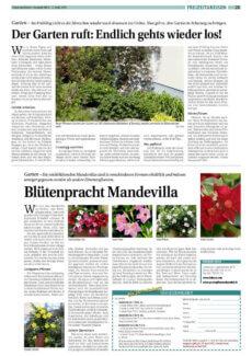 Presseartikel: Blütenpracht Mandevilla (HEV Schweiz | April 2015)