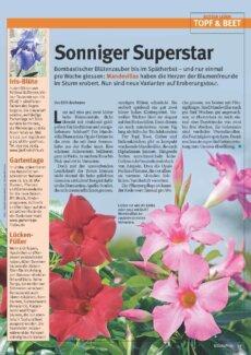 Presseartikel: Sonniger Superstar (Glückspost | Mai 2014 )
