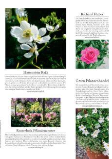 Presseartikel: Blütenwunder Mandevilla (Das ideale Heim | Frühling 2017)
