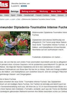 Presseartikel: Blütenwunder Dipladenia-Tourmaline Intense Fuchsia (bei Uns - Luzerner Zeitung | April 2018)