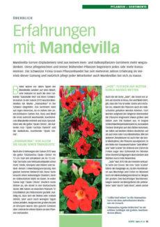 Presseartikel: Erfahrungen mit Mandevilla (Deutscher Gartenbau Produktion & Handel | Mai 2013 )