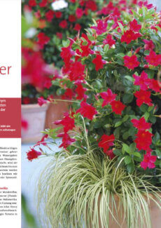 Presseartikel: Blütenwunder Mandevillas (Freude am Garten | März 2012 )