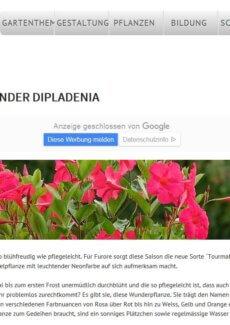 Presseartikel: Blütenwunder Dipladenia (garten.ch | März 2018)