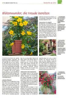 Presseartikel:  Mandevillas: Blütenwunder, die Freude bereiten (Gartenfreund | Juni 2012 )