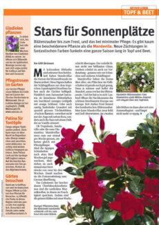 Presseartikel:  Dipladenia Diamantina: Das exotische Wunder (Schweizer Landliebe | Juni 2012)
