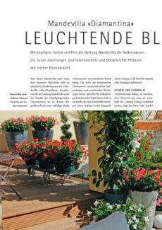 Presseartikel: Mandevilla Diamantina: Leuchtende Blust (Schweizer Garten | März 2012 )
