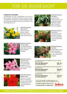 Presseartikel:  Leserangebot Mandevilla (Schweizer Garten | März 2014 )