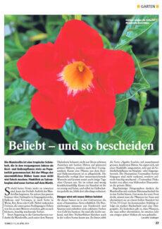 Presseartikel: Mandevilla: Beliebt – und so bescheiden (Tierwelt | April 2014)